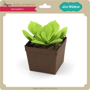 LW-Succulent-2