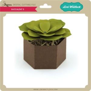 LW-Succulent-3