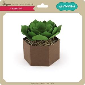 LW-Succulent-6