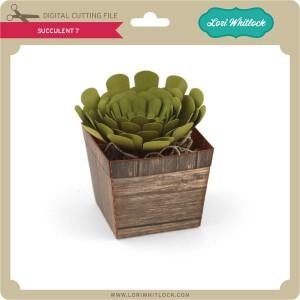 LW-Succulent-7